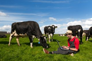 Cows and faster internet speeds